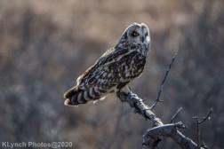 Owl_104