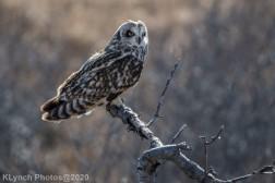 Owl_105
