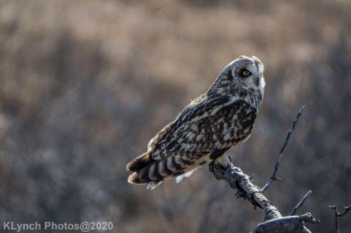 Owl_107