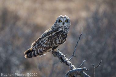 Owl_109