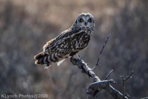 Owl_110