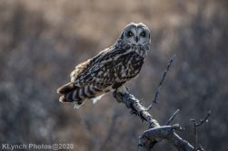 Owl_111