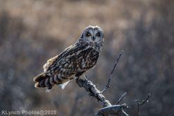 Owl_112