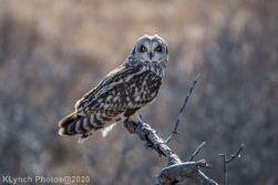 Owl_116