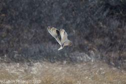 Owl_12