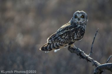 Owl_120