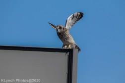 Owl_23