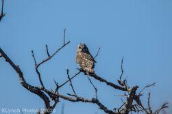 Owl_40