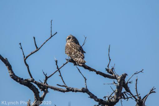 Owl_41