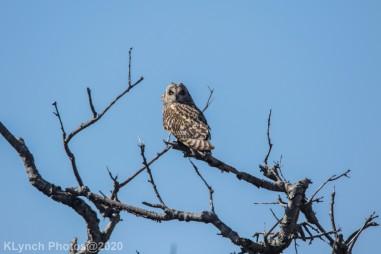 Owl_42