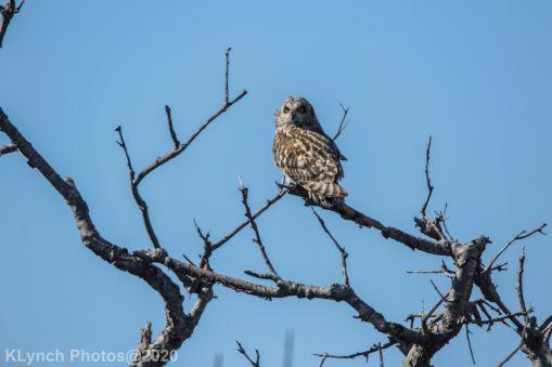 Owl_44