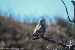 Owl_46