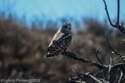 Owl_47