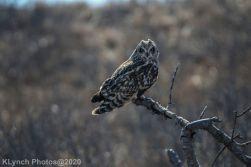 Owl_57