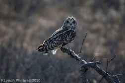 Owl_69
