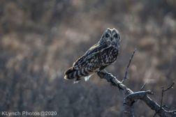 Owl_70