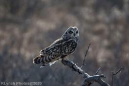 Owl_73