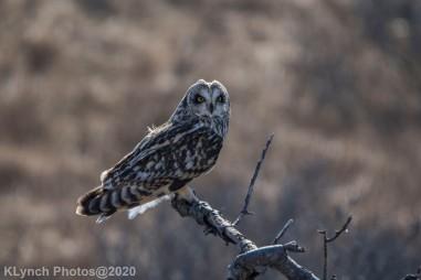 Owl_76
