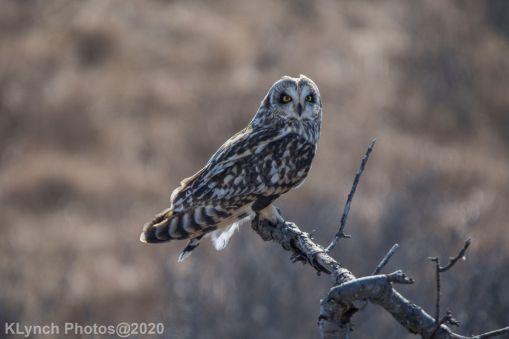 Owl_77