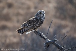 Owl_83
