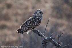 Owl_84