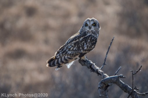 Owl_85