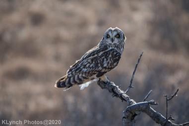 Owl_86