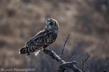 Owl_87