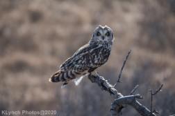 Owl_90