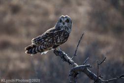 Owl_91