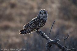 Owl_92
