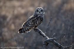 Owl_93