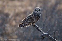 Owl_94