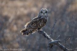 Owl_95