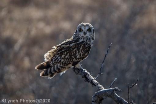 Owl_96