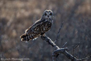Owl_98