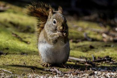 Squirrel_10