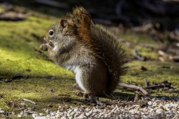 Squirrel_13