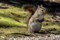 Squirrel_16