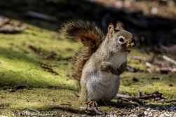 Squirrel_17