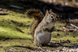 Squirrel_18