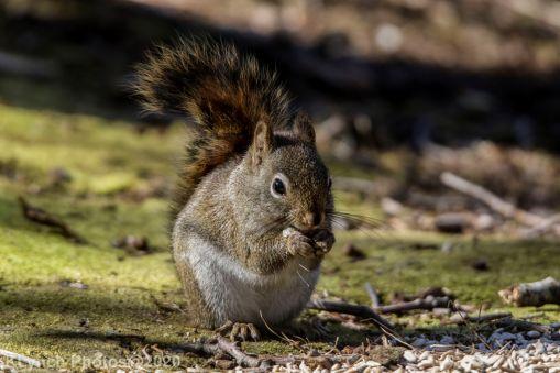 Squirrel_19