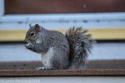 squirrel_2