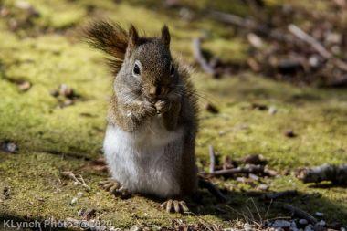 Squirrel_20
