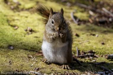 Squirrel_21