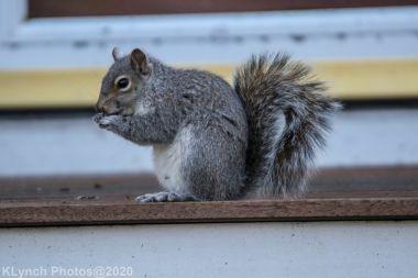 squirrel_3
