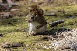 Squirrel_4