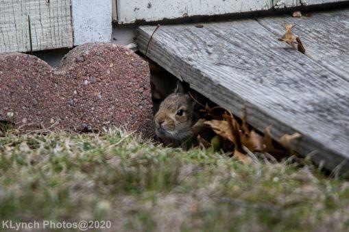 Rabbit_19