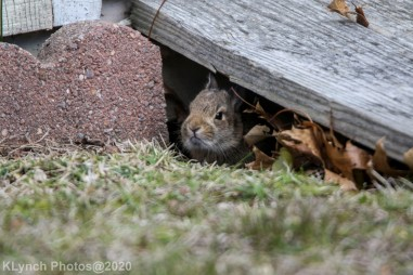 Rabbit_21