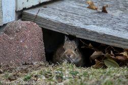 Rabbit_25